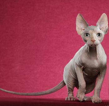 cat09090.jpg