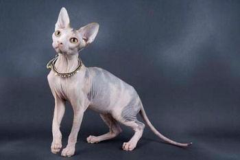 cat687686.jpg