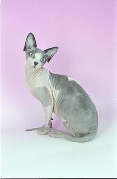 cat766.jpg