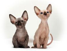 cat8871.jpg