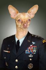 repchihuahuadog1.jpg